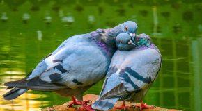 Foire et salons : nous ne sommes pas des pigeons !